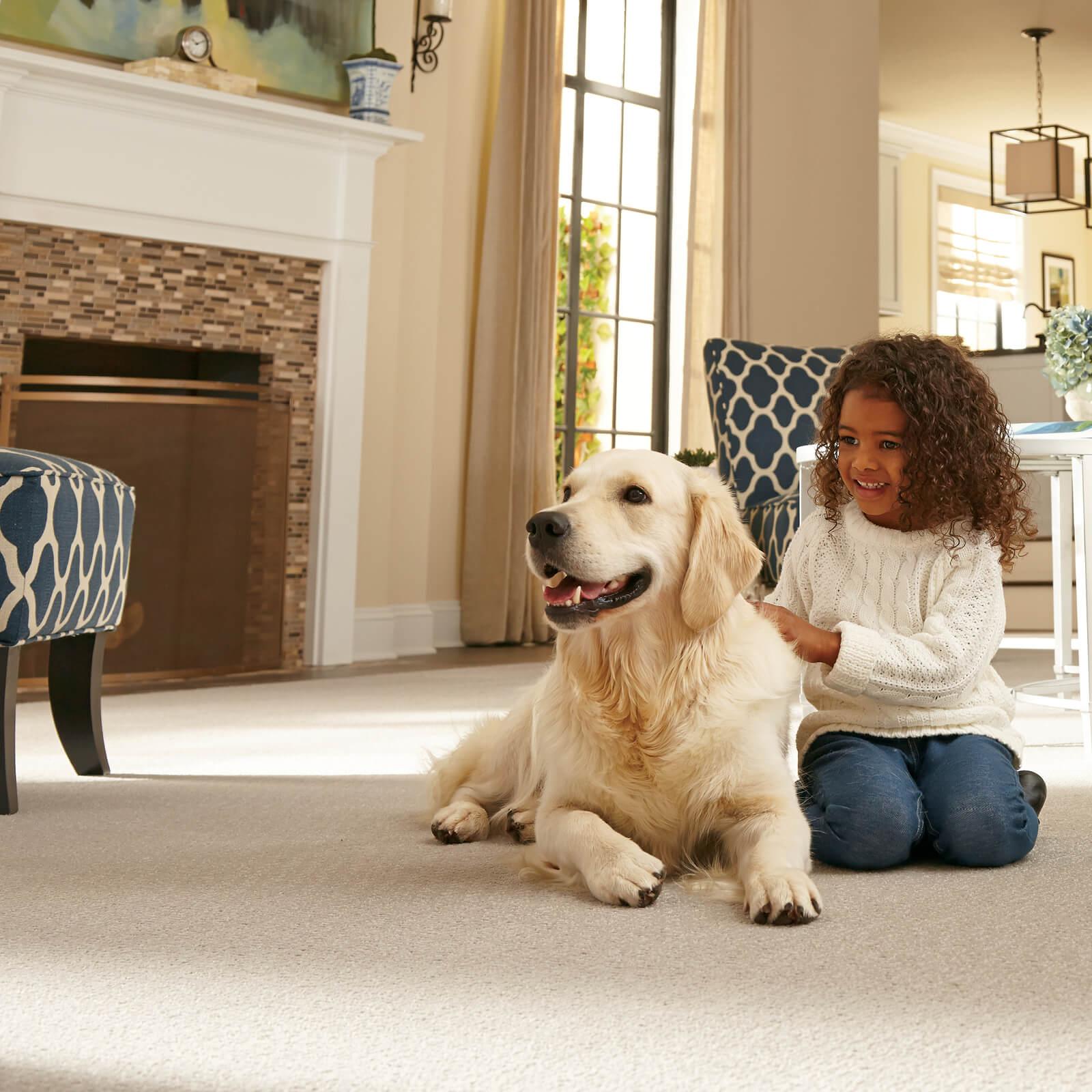 Dog on Carpeting   Haley's Flooring & Interiors