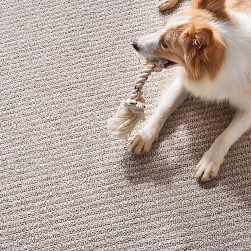 Pet friendly floor   Haley's Flooring & Interiors