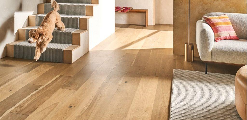 dog on hardwood | Haley's Flooring & Interiors